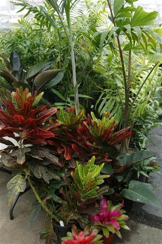 Названия многолетних цветов для дачи