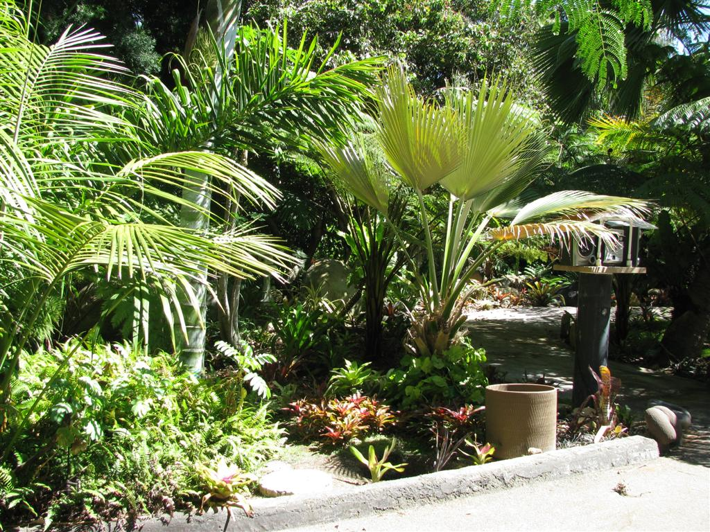 Palm gardens part 2 for Garden design with palms