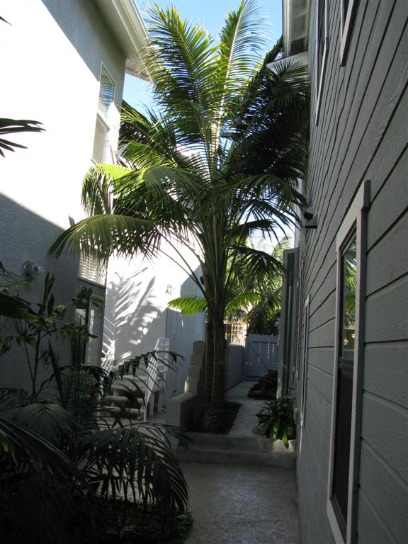 palms for a narrow area