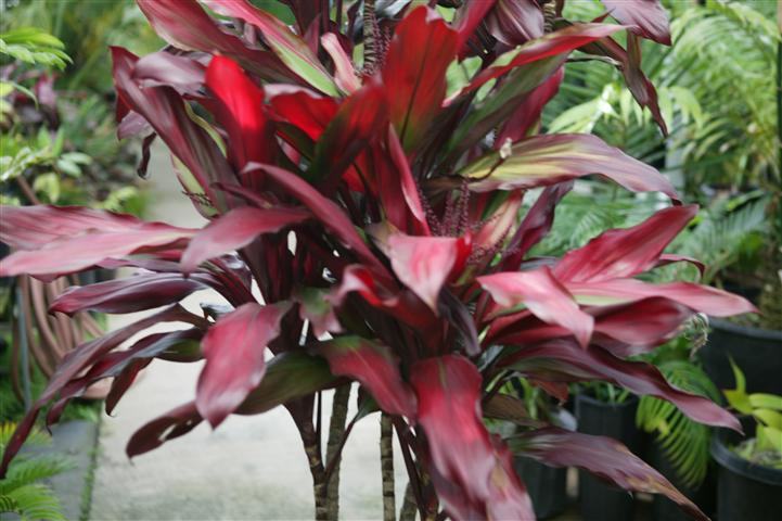 Tropical Plants Rainforest Plants That Look Great In The