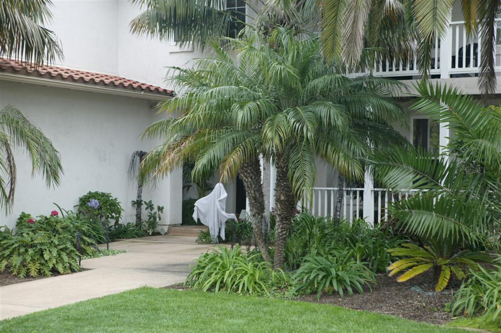 Dwarf date palm in Melbourne