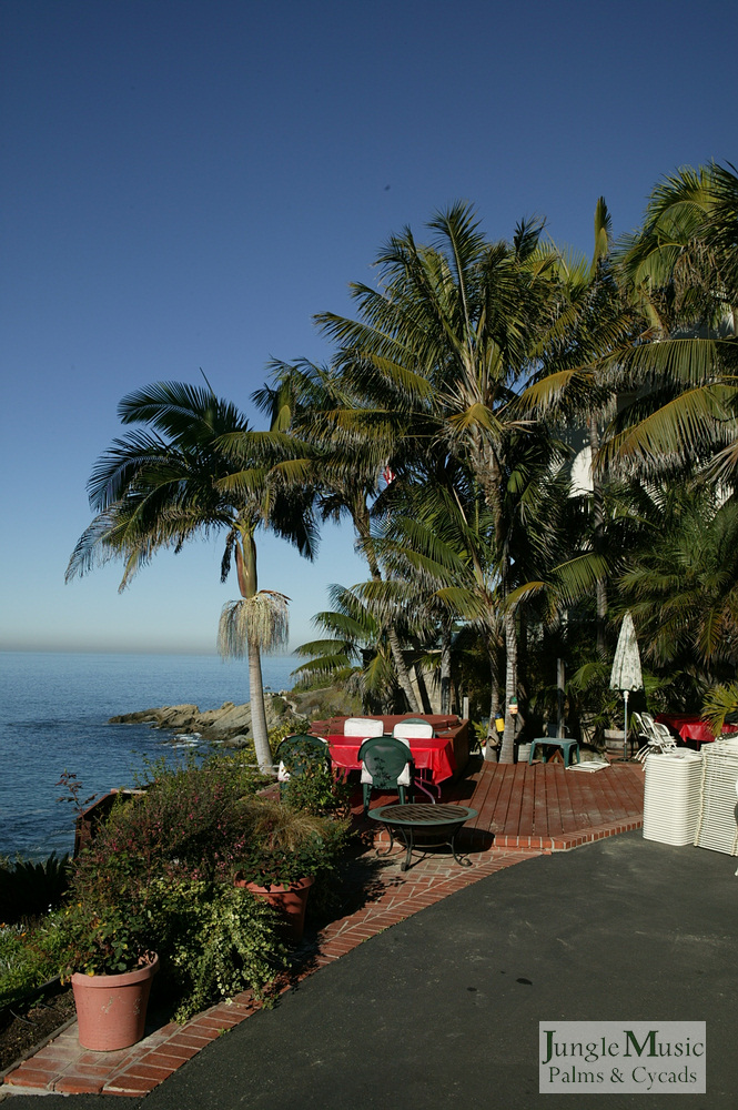 ../gallery2/gallery//large/palms/Oceanfront_Palms2-01072006.JPG