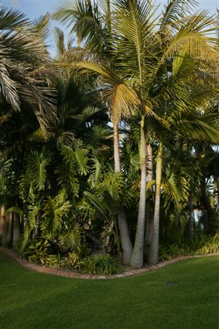 tropical landscaping in a commercial setting