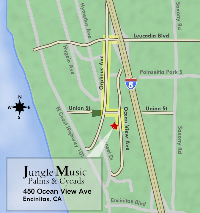 Directions, Jungle Music Palms And Cycads