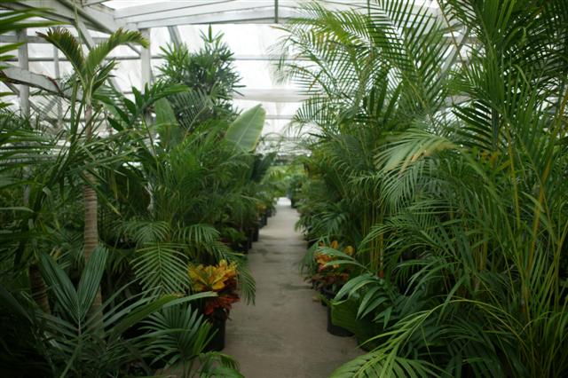 lush tropical plants