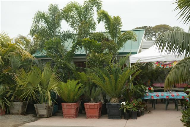 Plants At Specialty Palm Cycad Nursery
