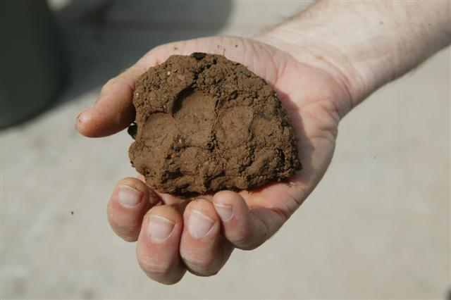 [Image: Clay%20Soil,%20Finger%20impressions%20(Small).JPG]