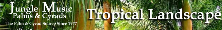 tropical plants banner