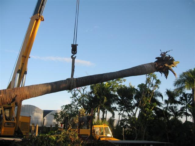 crane moving palm