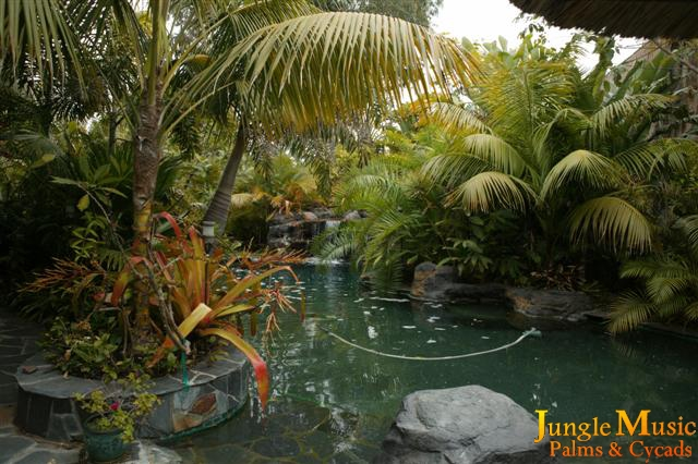 Tropical Landscape - Emphasis on Palm Trees, Cycads and ... on desert landscape ideas, waterfall landscape ideas, tropical landscape ideas, tree landscape ideas, coastal landscape ideas, water wise landscape ideas,