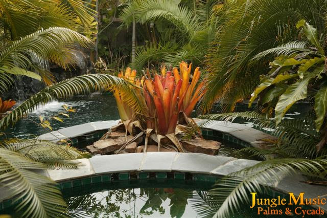 Tropical Garden Design accent areas