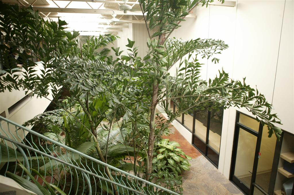 new gallery 3 caryota mitis office plant large jpg