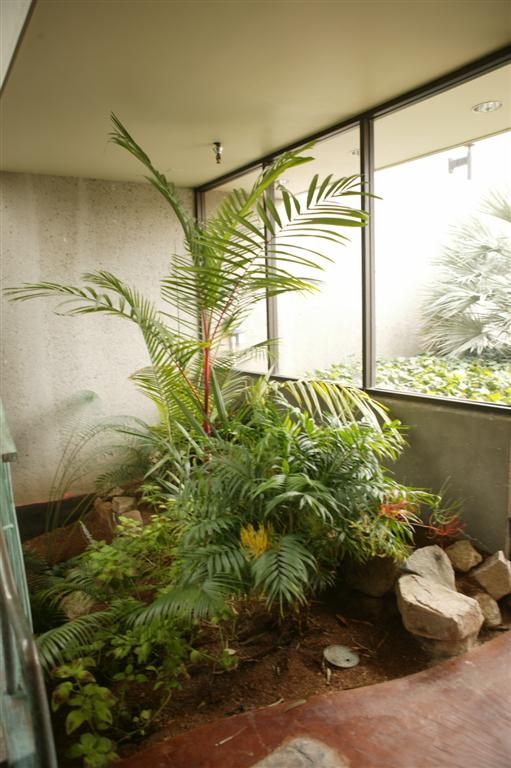 /new gallery 3/cyrtostachys renda as office plant (large).jpg
