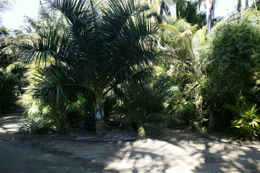 /new gallery 3/dypsis decipiens d.o. house (large).jpg