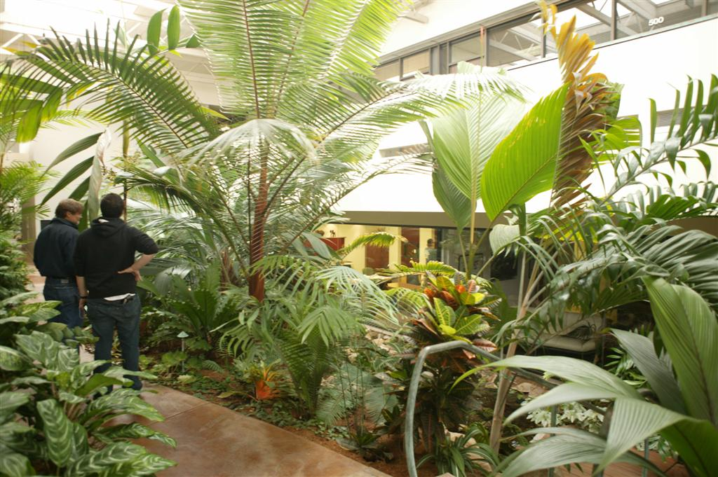 /new gallery 3/dypsis lastelliana as office plant (large).jpg