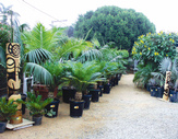 Open house jungle music palms cycads for Jungle house music