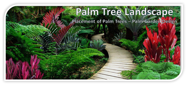 Placement Of Palms Banner Palm Tree Landscape