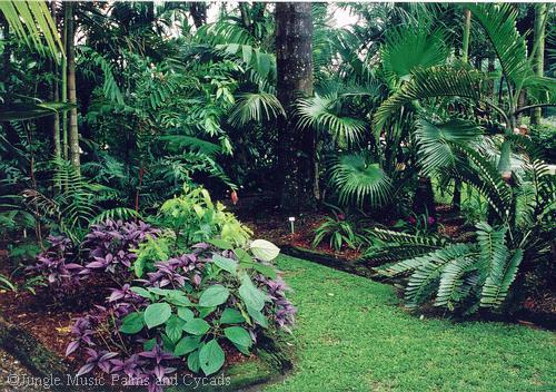 الحدائق,المنزلية , www.mn66.com , عالم المرأة , الحدائق المنزلية